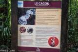 Learning about Le Cagou, the Kagu