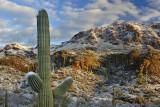 Winter in Arizona - 2013
