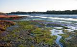 Elkhorn Slough Mud Flats
