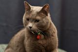 Yogi: Great Grey Cat