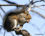 _MG_0255_Squirrel.jpg