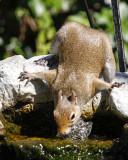 _MG_2460_Squirrel.jpg