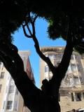 Big Jones Street Tree