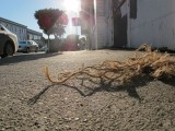 Street Rope