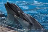 Fakieh Aquarium - Jeddah