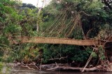 The liana bridge at Pubara near Franceville. 5/10/96.