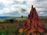 BaTéké Plateau of SE Gabon. Rolling grasslands with termite mounds. 6/10/96.