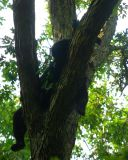 Nap Time in a Tall Oak Tree