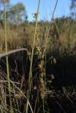 D.sp blackwood river