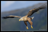 Eagles of Norway