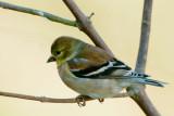 Bird a Day 2013
