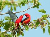 Spring Migration 2013