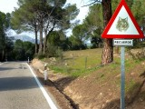Iberian lynx traffic sign
