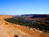 Ohasis in the Desert