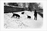 Les chiens (2)