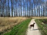 Sneekermeer walk