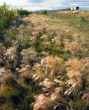 Roadside grass