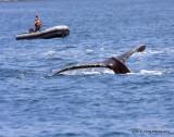 Whale Raft IMG_0890.jpg