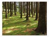 Wald / wood