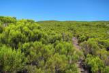 Montane heath on Mt. Karthala