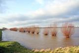 De waal bij hoog water/Le Rhin en crue
