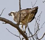 Wheeler National Wildlife Refuge - 10/19/2012