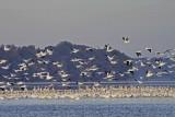 Wheeler National Wildlife Refuge - 10/23/2012