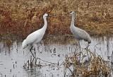 Wheeler National Wildlife Refuge - 12/11/2012