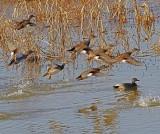 Wheeler National Wildlife Refuge - 12/13/2012