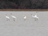 Wheeler National Wildlife Refuge - 12/27/2012
