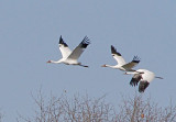 Wheeler National Wildlife Refuge - 01/18/2013