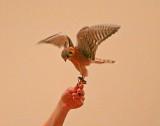 Wheeler National Wildlife Refuge - 03/09/2013 -Program Day