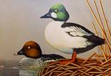 Wheeler National Wildlife Refuge - 03/26/2013 Youth Duck Stamp Judging