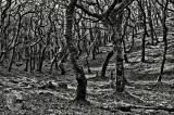 Badgerworthy Woods on Exmoor