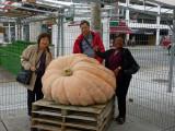 Byward Pumpkin