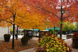 Changing leaves in Old Montreal