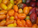 Heirloom tomatoes, Roma variety