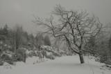 Belmont en hiver
