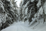 walking alone in the white snowy forest
