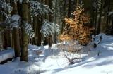 la fin de l'hiver