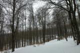 still winter,