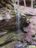 Borden Creek trail, Bankhead NF