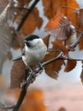 Birds in Autumn