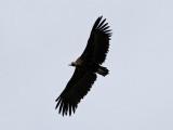 Birdtrip to Spain 2013