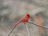 Birdtrip to USA 2013