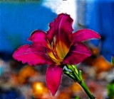 2nd flower.jpg