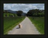 Thumper on The Warburton Trail