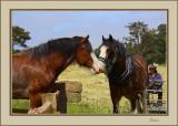 Draught Horse Festival