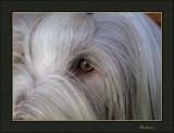 Thumper : full frame close up