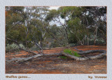 The Mallee in winter